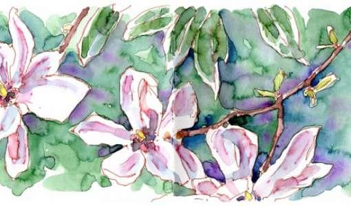 Floral Sketching - Botanische Skizzen