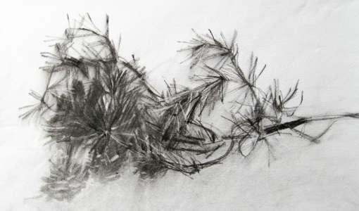 Zeichnen mit Kohle – Ausdrucksstark in Schwarz/Weiss